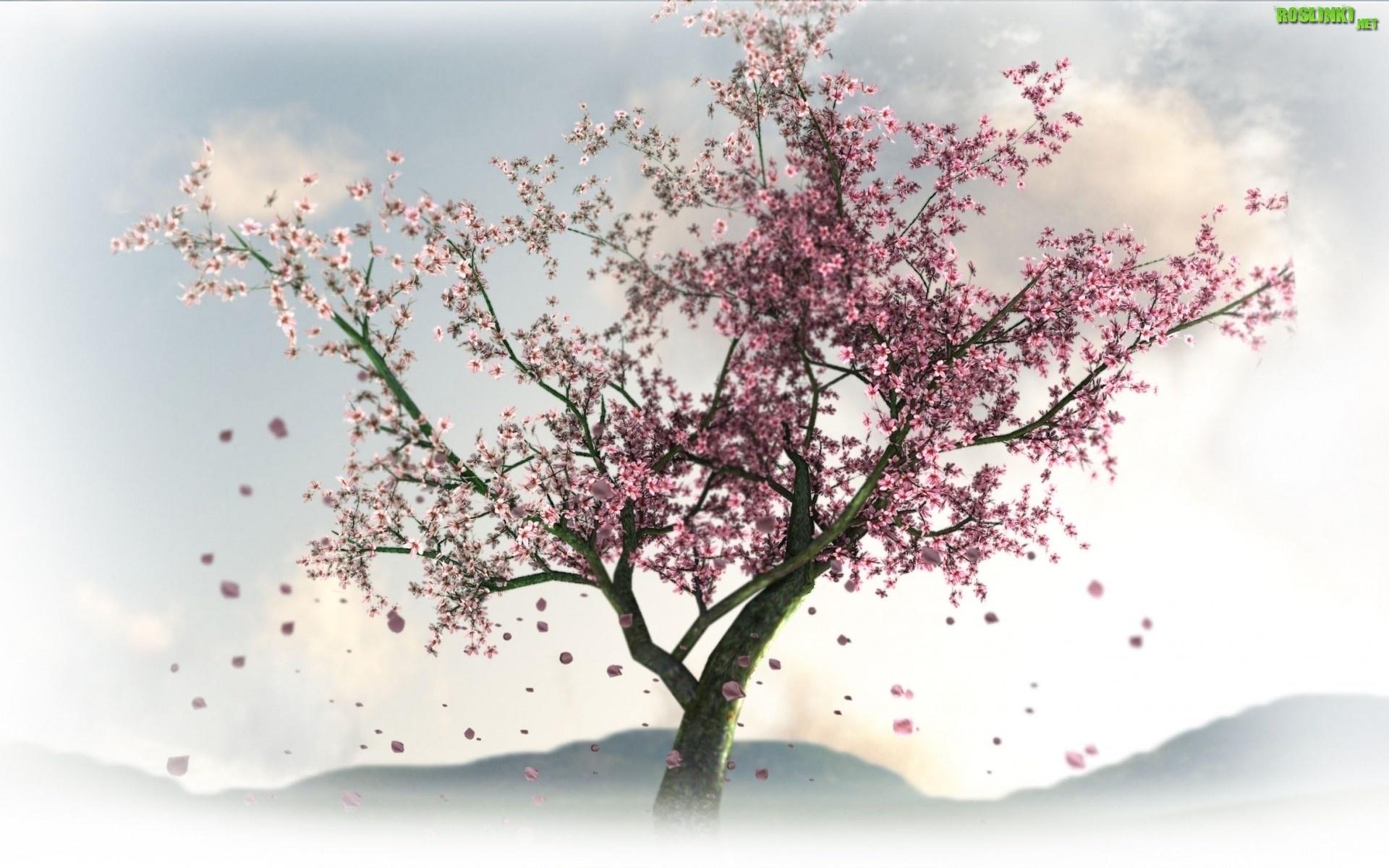 Drzewo kwiaty wi ni for Arboles para jardin japones